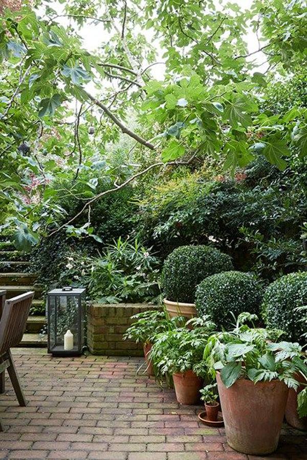 jungle garden design ideas photo - 10