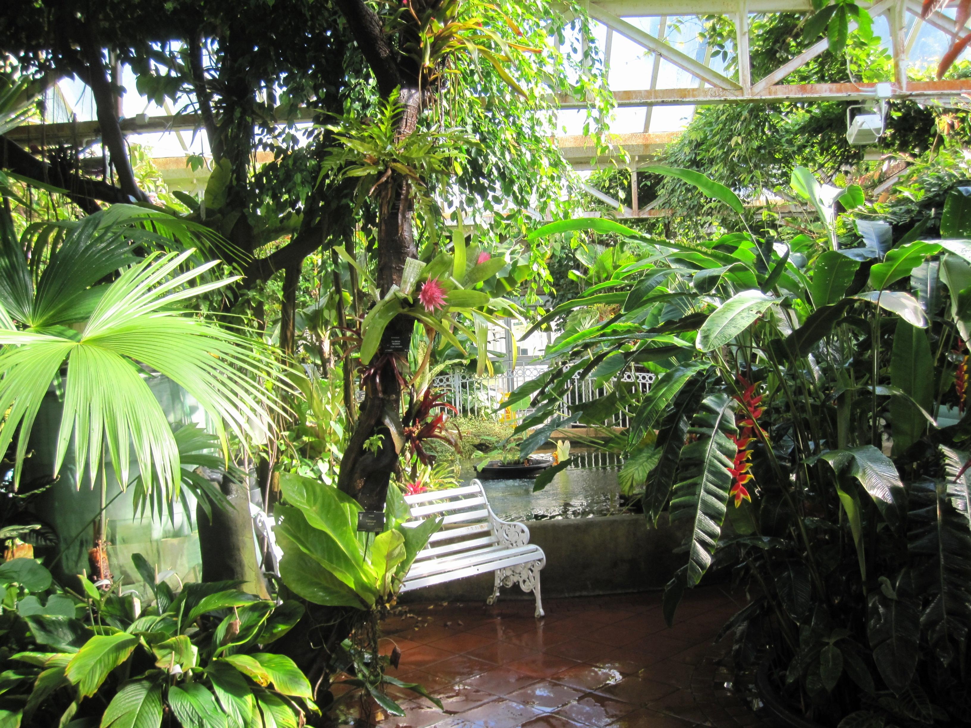 jungle garden design ideas photo - 5