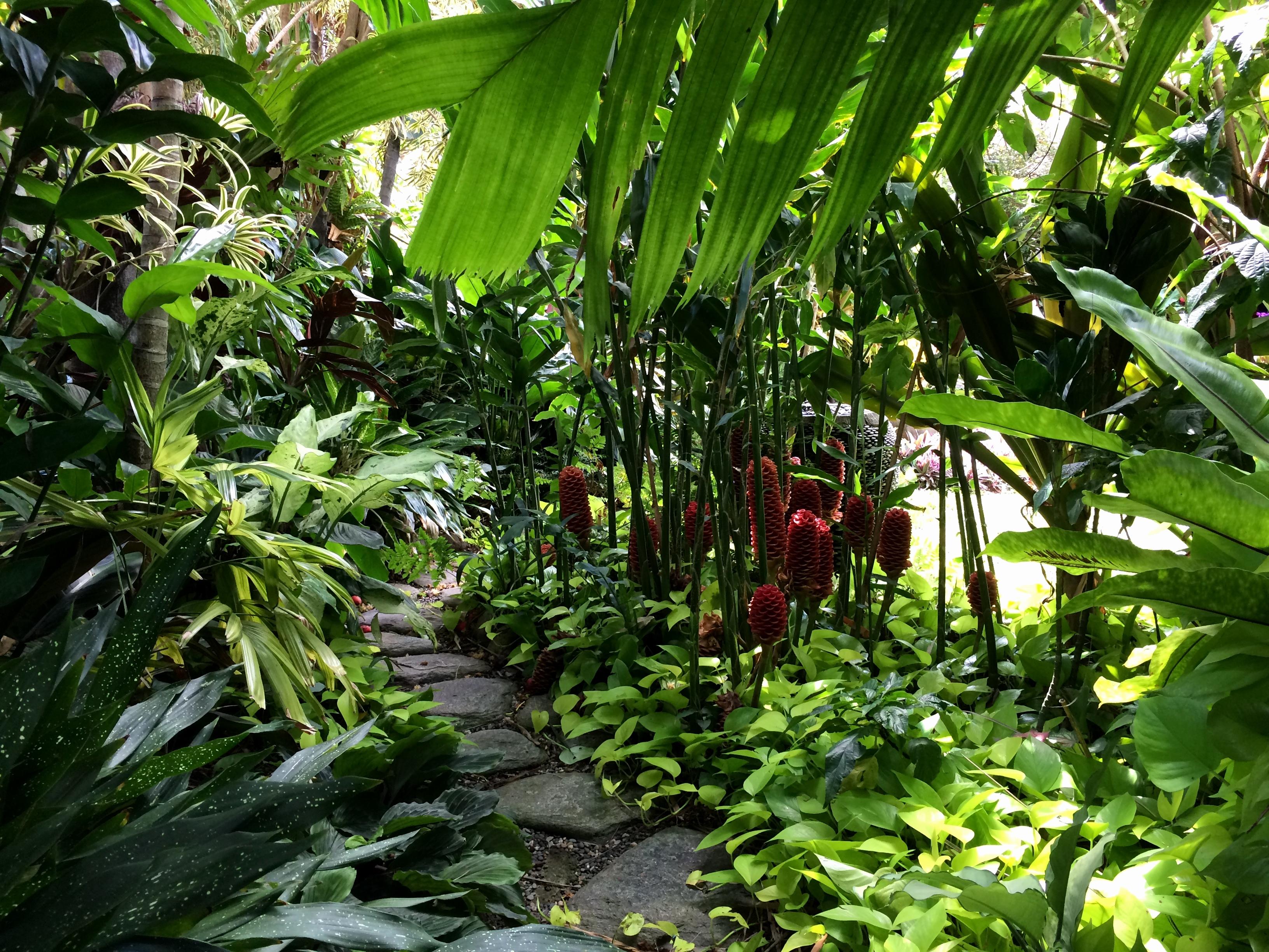 jungle garden design ideas photo - 7