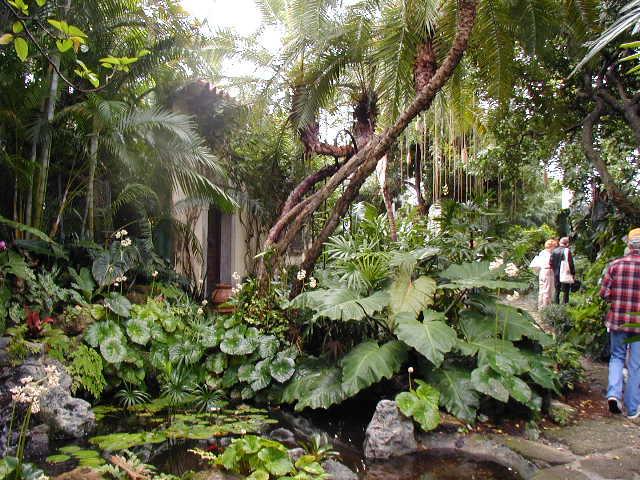 jungle garden design ideas photo - 8
