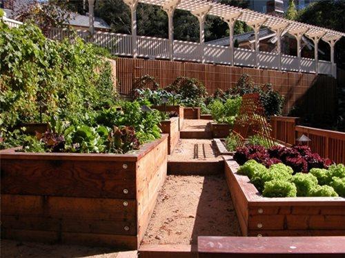 kitchen garden design ideas photo - 3
