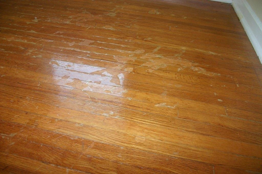 laminate wood flooring dogs photo - 3