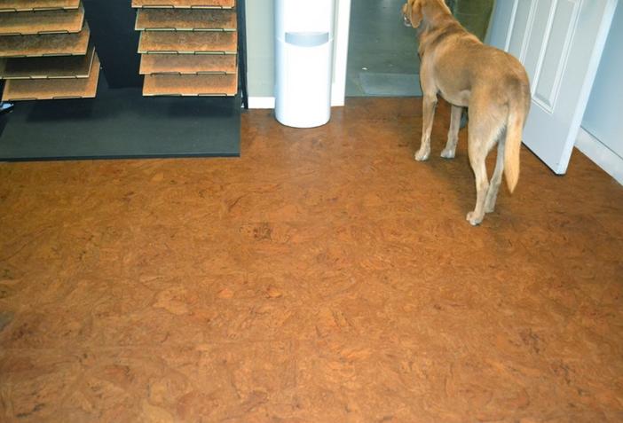 laminate wood flooring dogs photo - 8