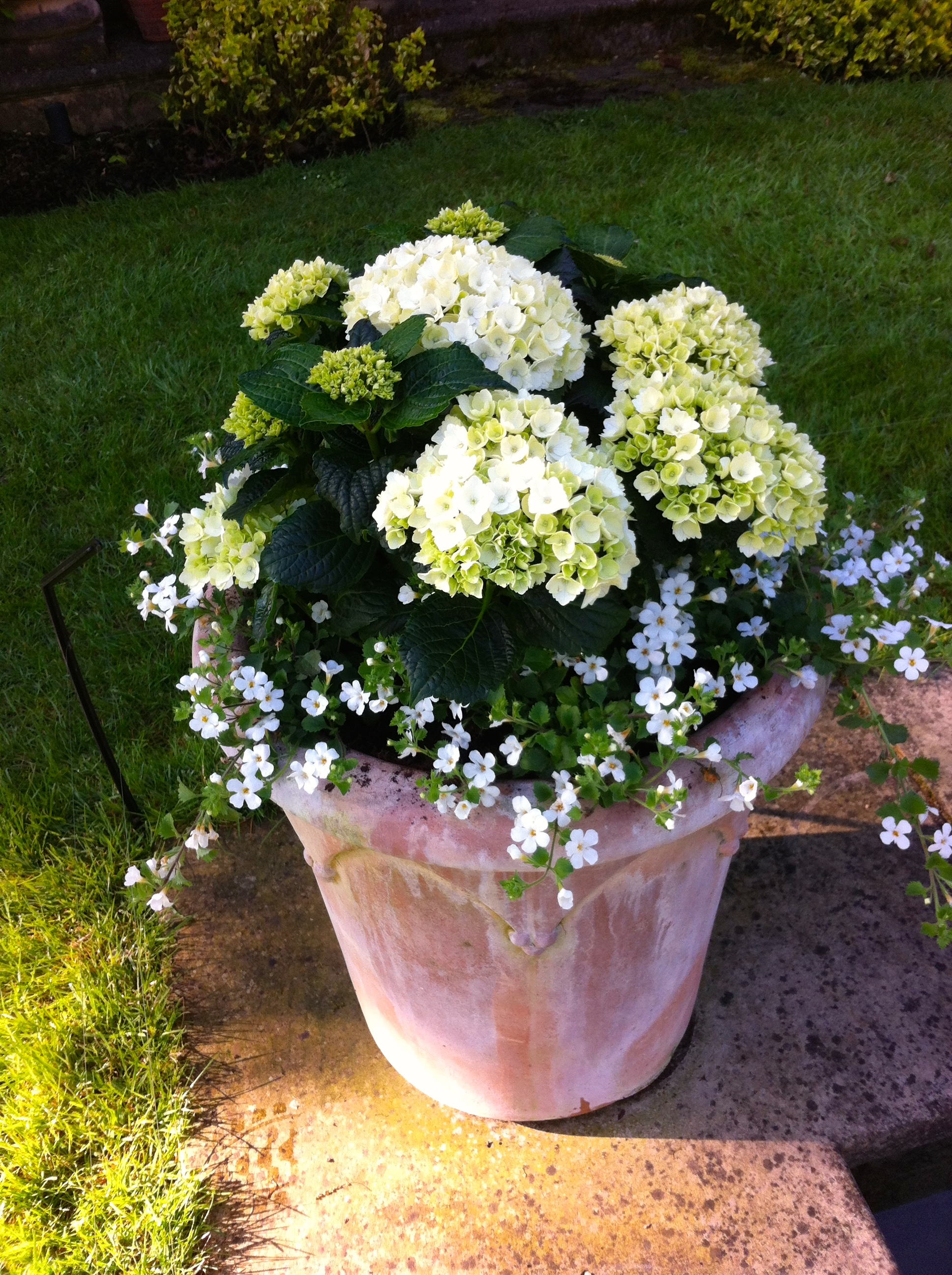 large designer garden pots photo - 9