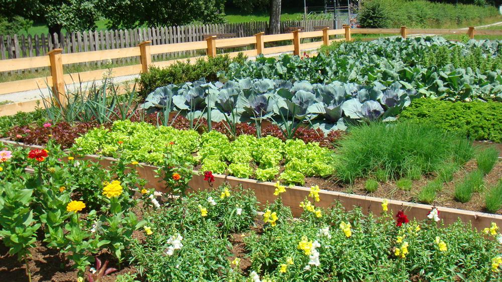 large vegetable garden design photo - 4