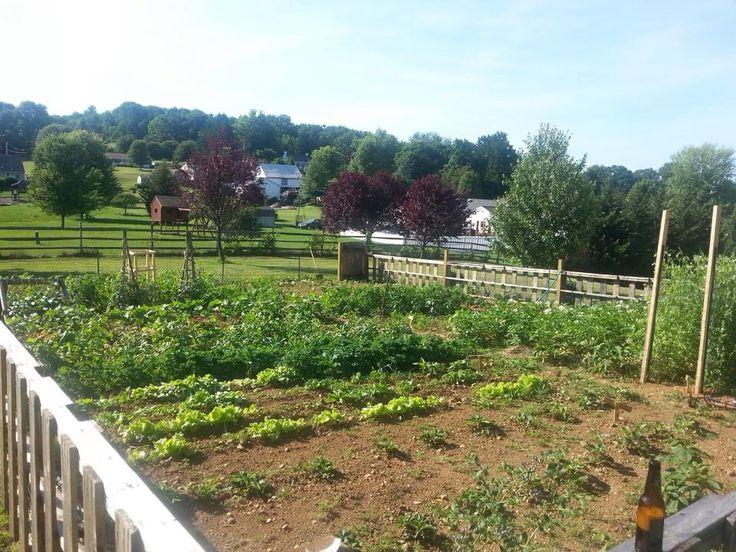 large vegetable garden design photo - 6
