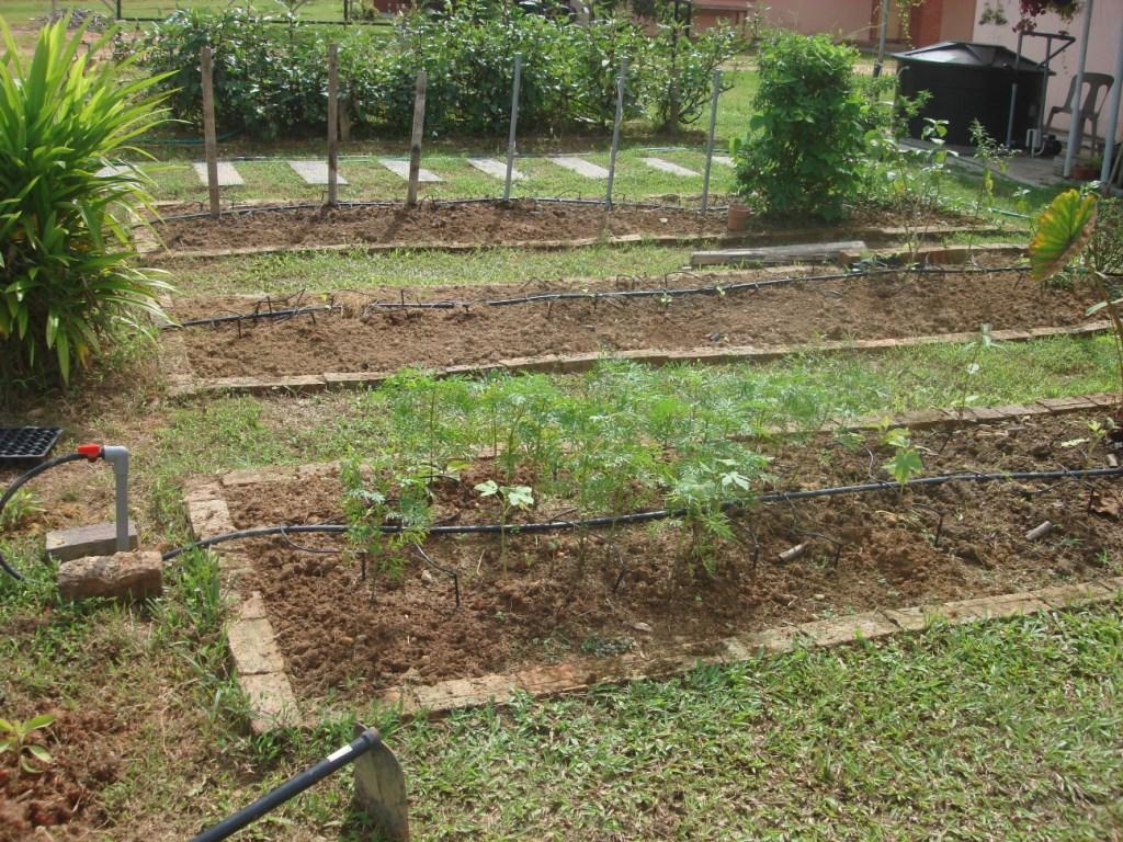 Large vegetable garden design | Hawk Haven