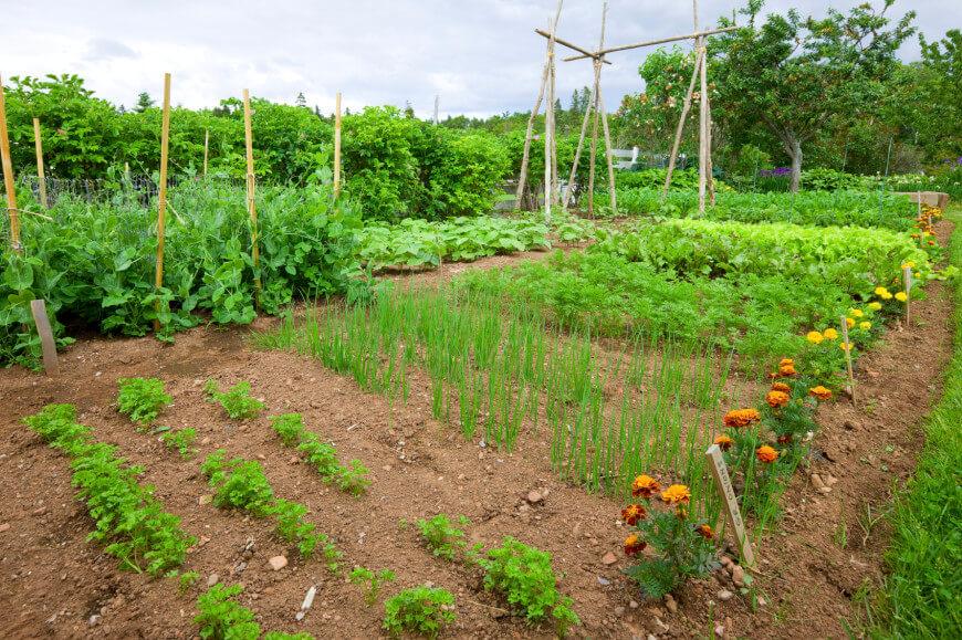 large vegetable garden design photo - 8