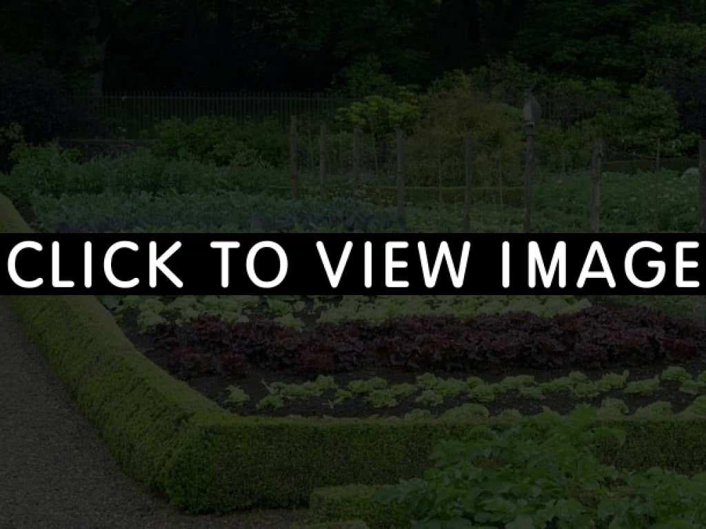 large vegetable garden design photo - 9