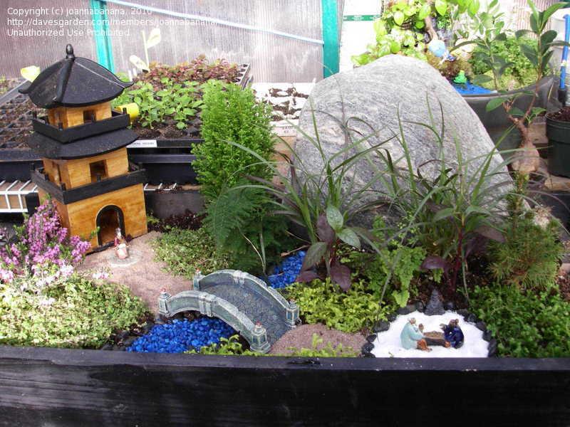 mini japanese garden design ideas photo - 9
