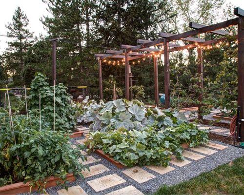 planning an urban vegetable garden photo - 2