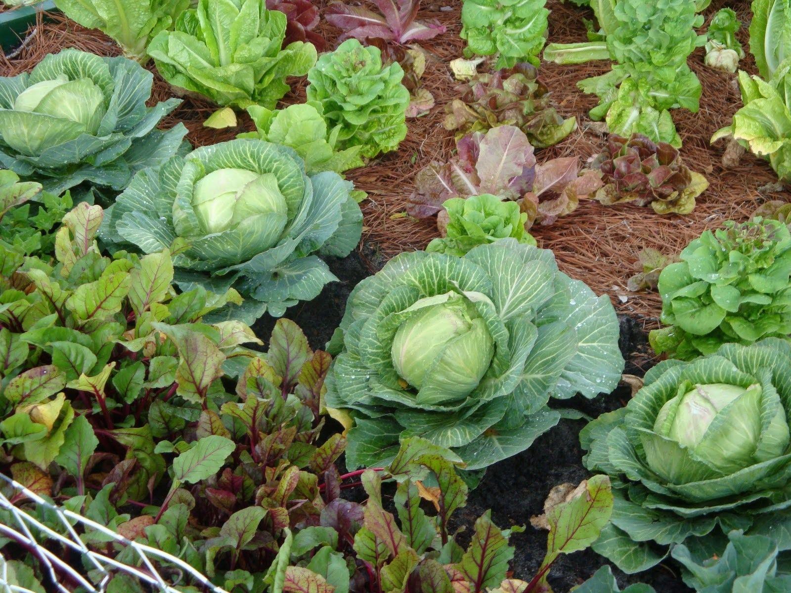 planning an urban vegetable garden photo - 4