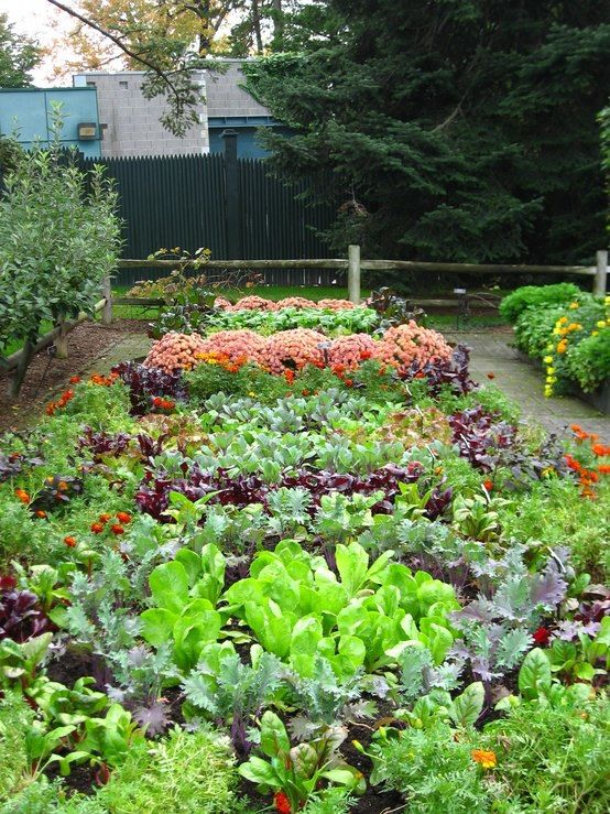 planning an urban vegetable garden photo - 5