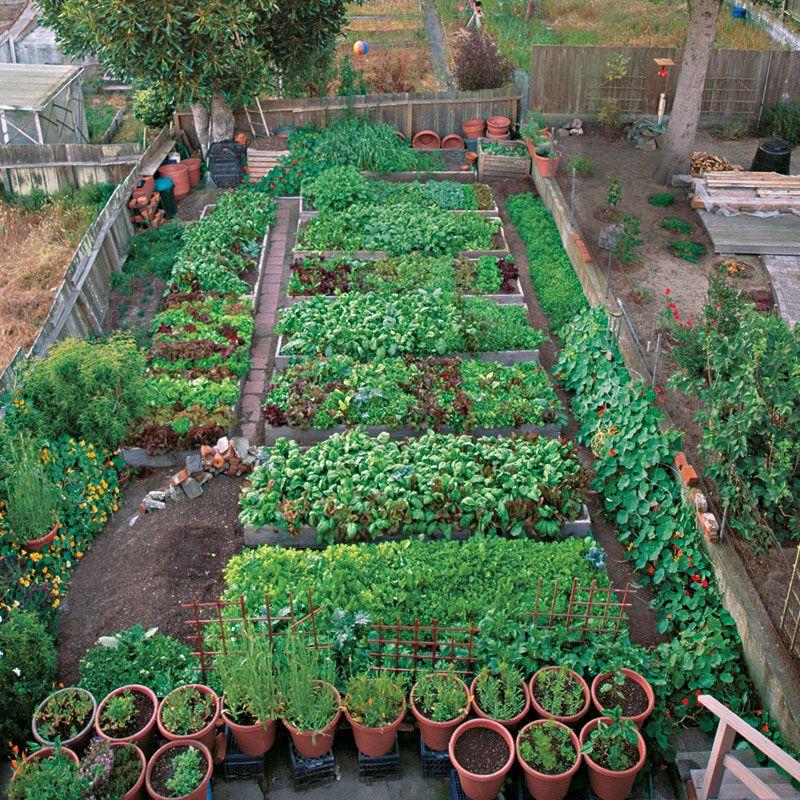 planning an urban vegetable garden photo - 6