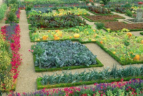 planning an urban vegetable garden photo - 8