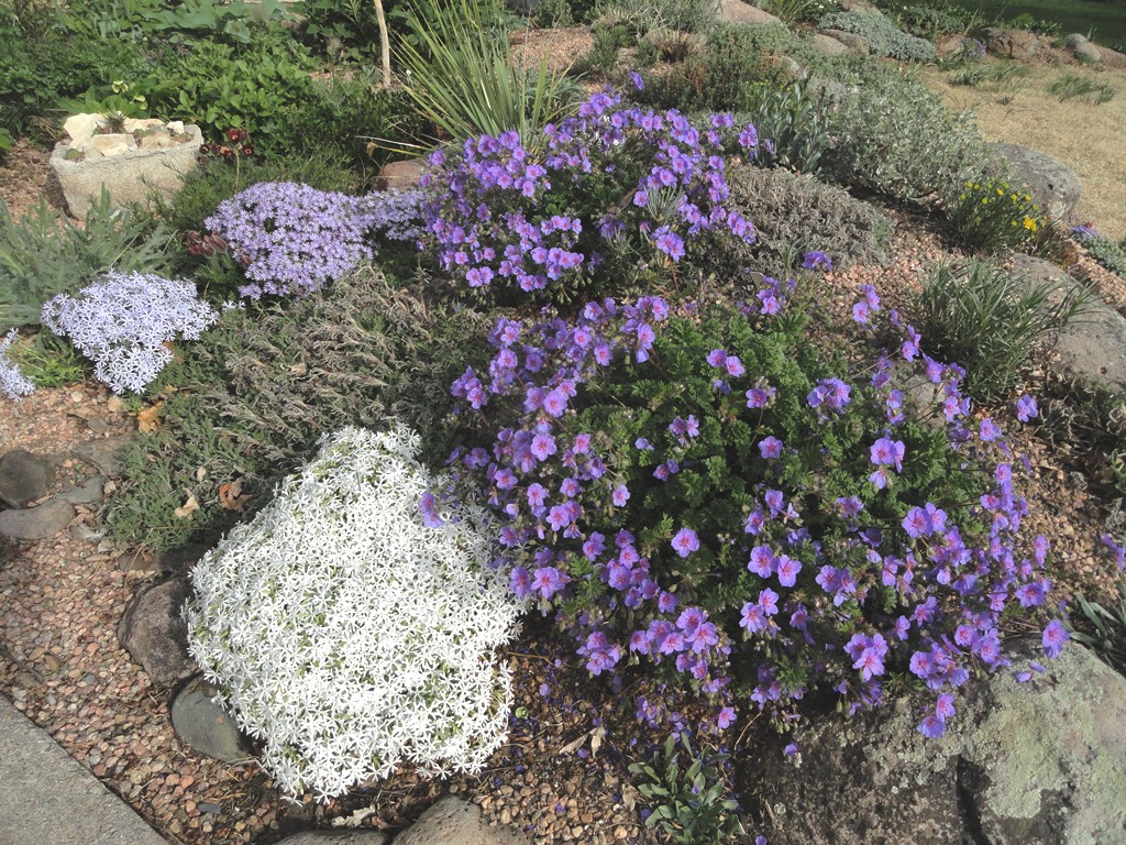 plants and shrubs for rock gardens photo - 10