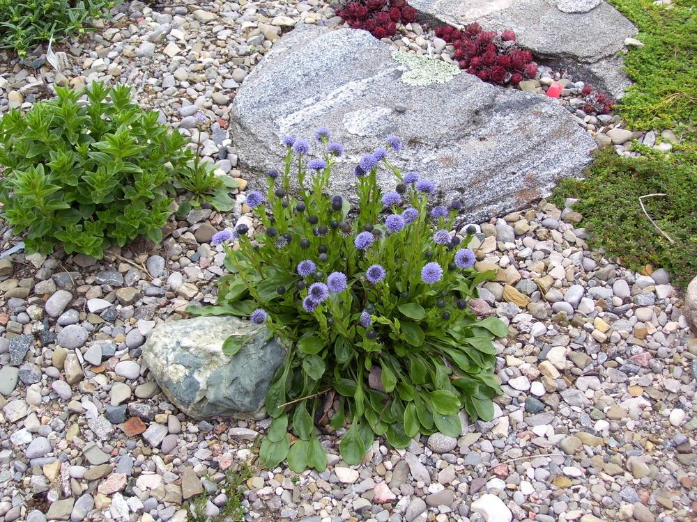 plants and shrubs for rock gardens photo - 4