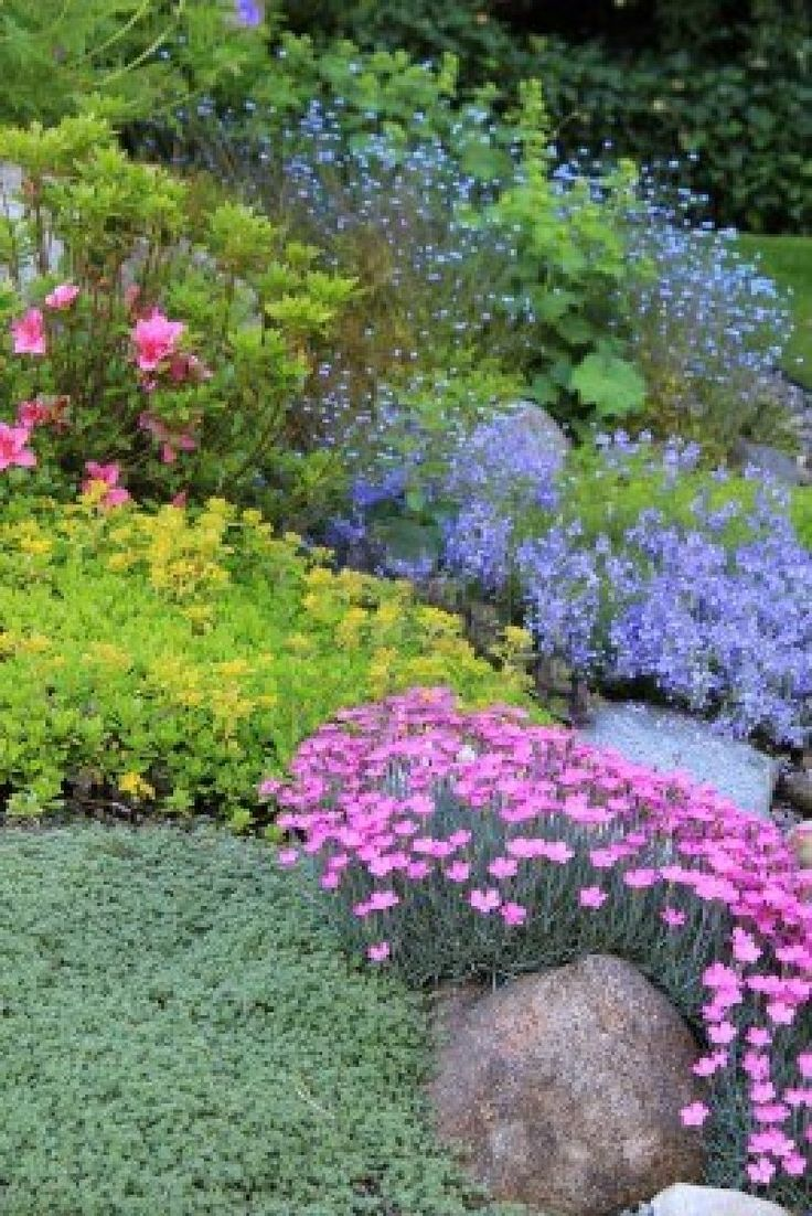 plants and shrubs for rock gardens photo - 9