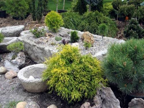 plants for rock gardens full sun photo - 1