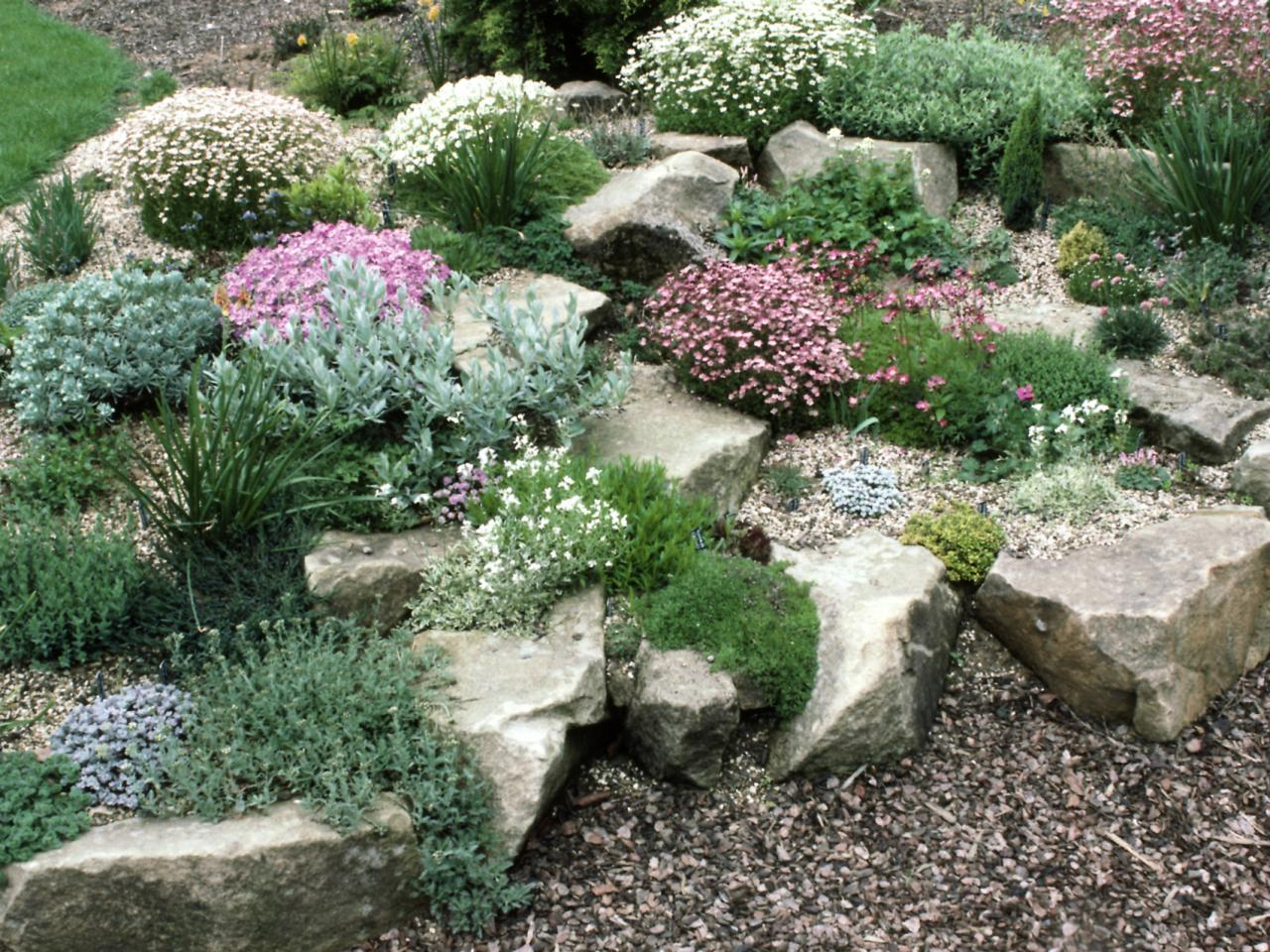 Rock Garden Plants For Zone 3 - Garden Designs on