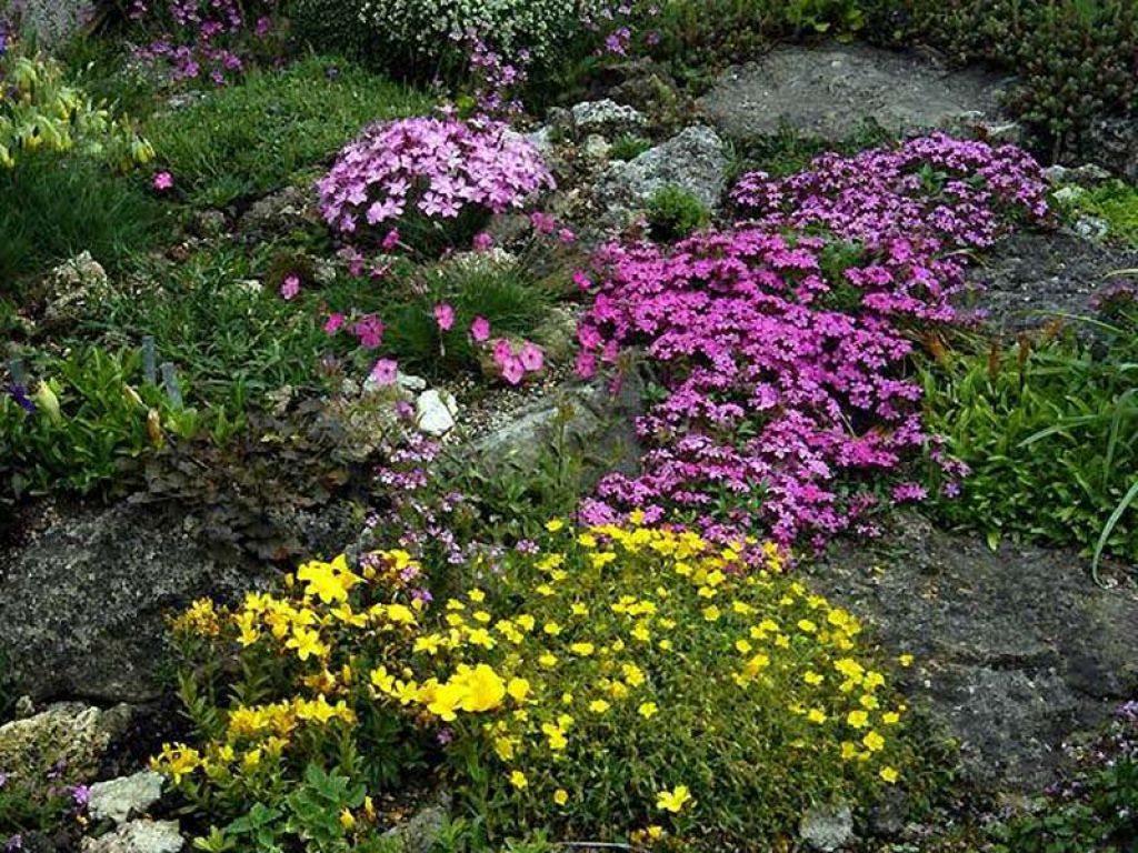 plants for rock gardens full sun photo - 6