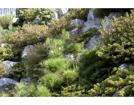 plants for rock gardens full sun photo - 9