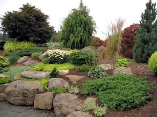 plants for rock gardens zone 4 photo - 1
