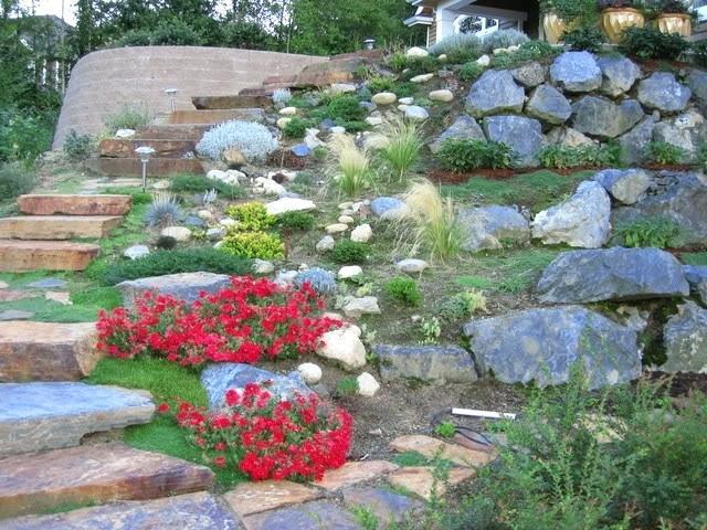plants for rock gardens zone 4 photo - 3