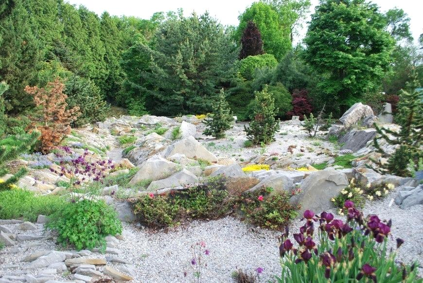 plants for rock gardens zone 4 photo - 6