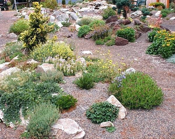 plants for rock gardens zone 4 photo - 7