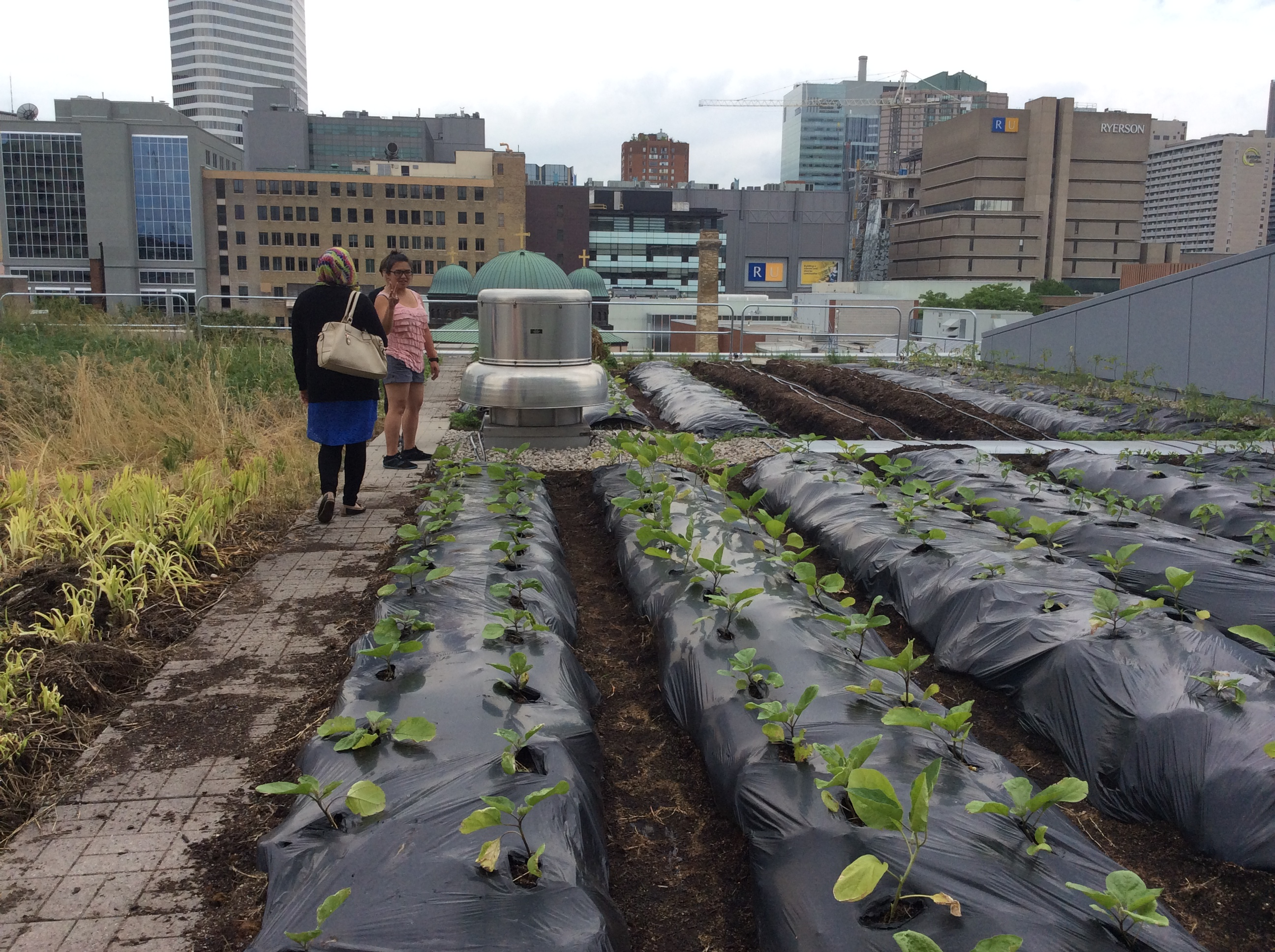 rooftop edible gardens photo - 10
