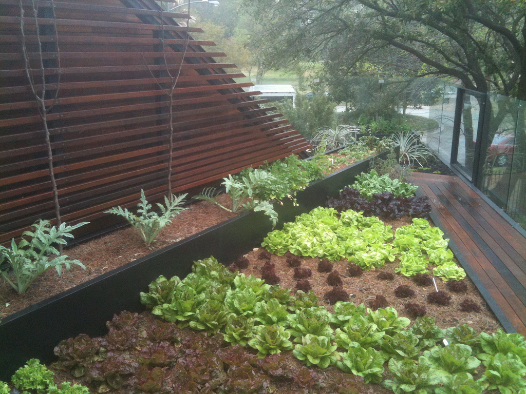rooftop edible gardens photo - 2