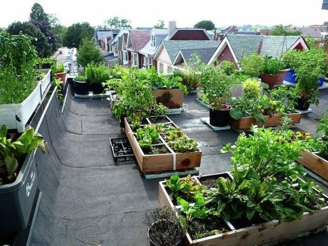 rooftop edible gardens photo - 5