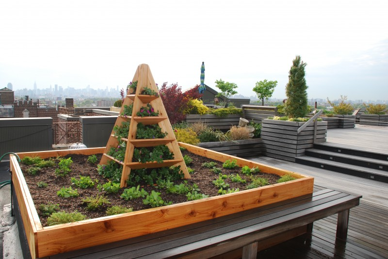 rooftop edible gardens photo - 6