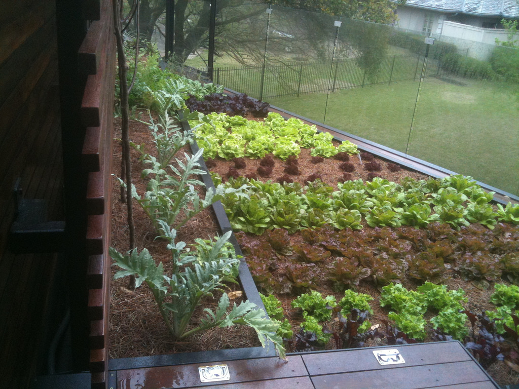 rooftop edible gardens photo - 7