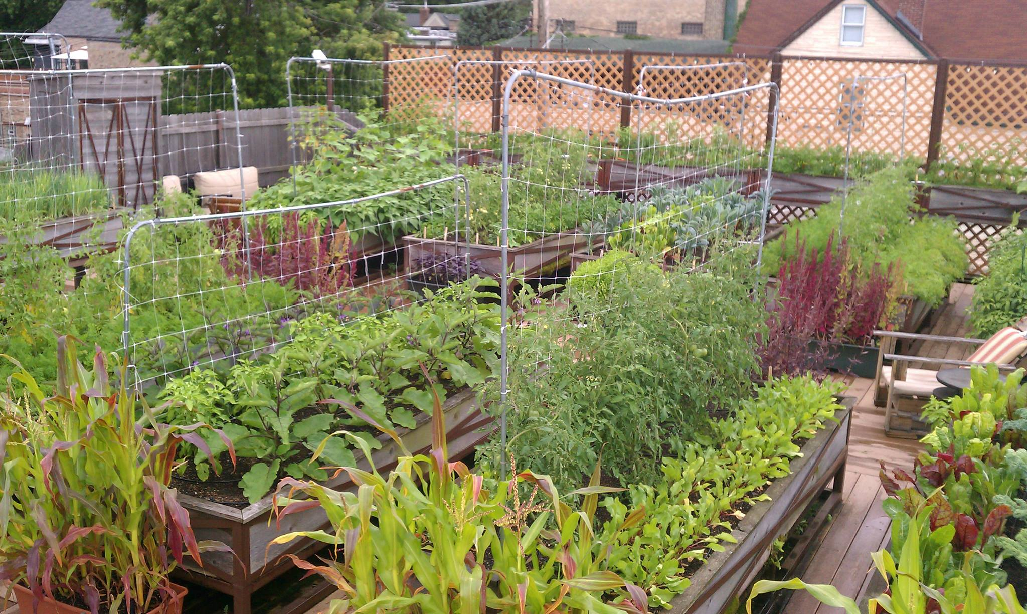 rooftop flower gardens photo - 2