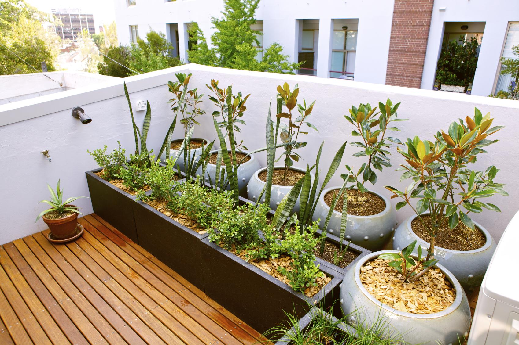 rooftop flower gardens photo - 8