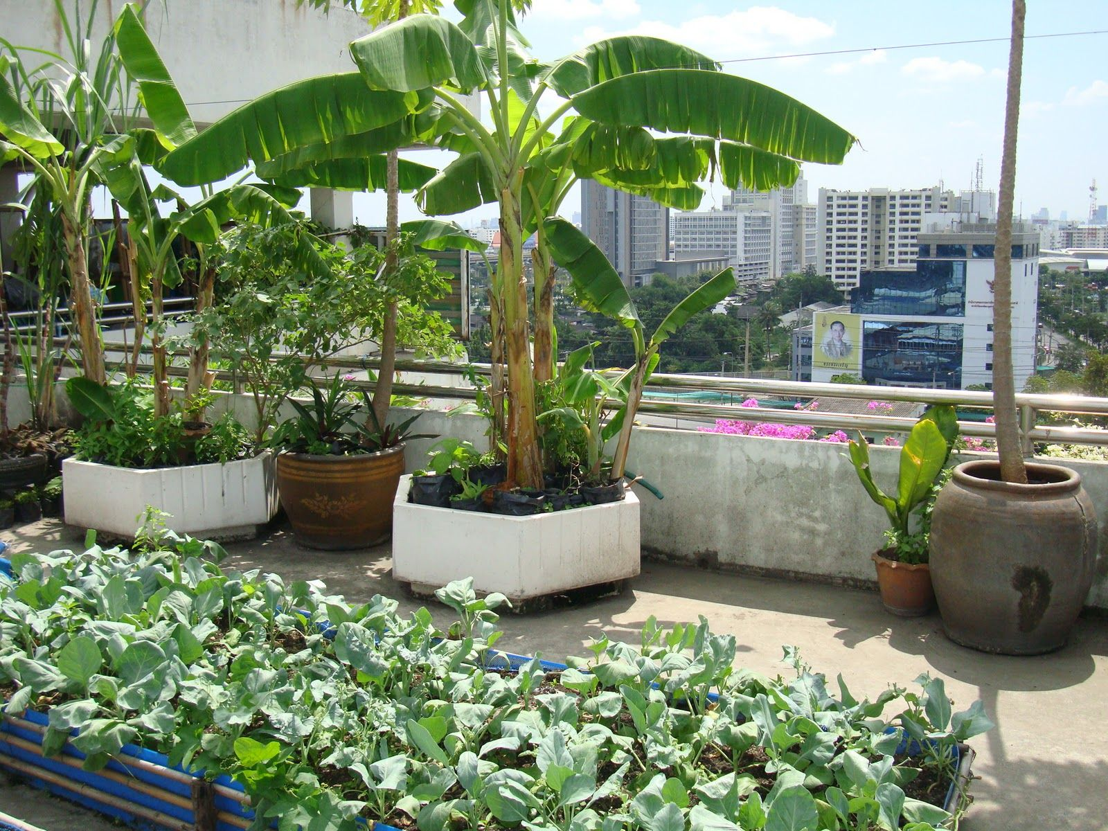 rooftop gardens ideas photo - 9