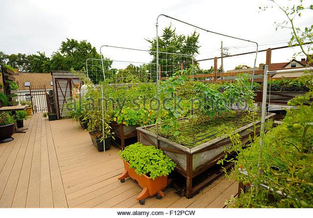 Rooftop Vegetable Gardens Hawk Haven