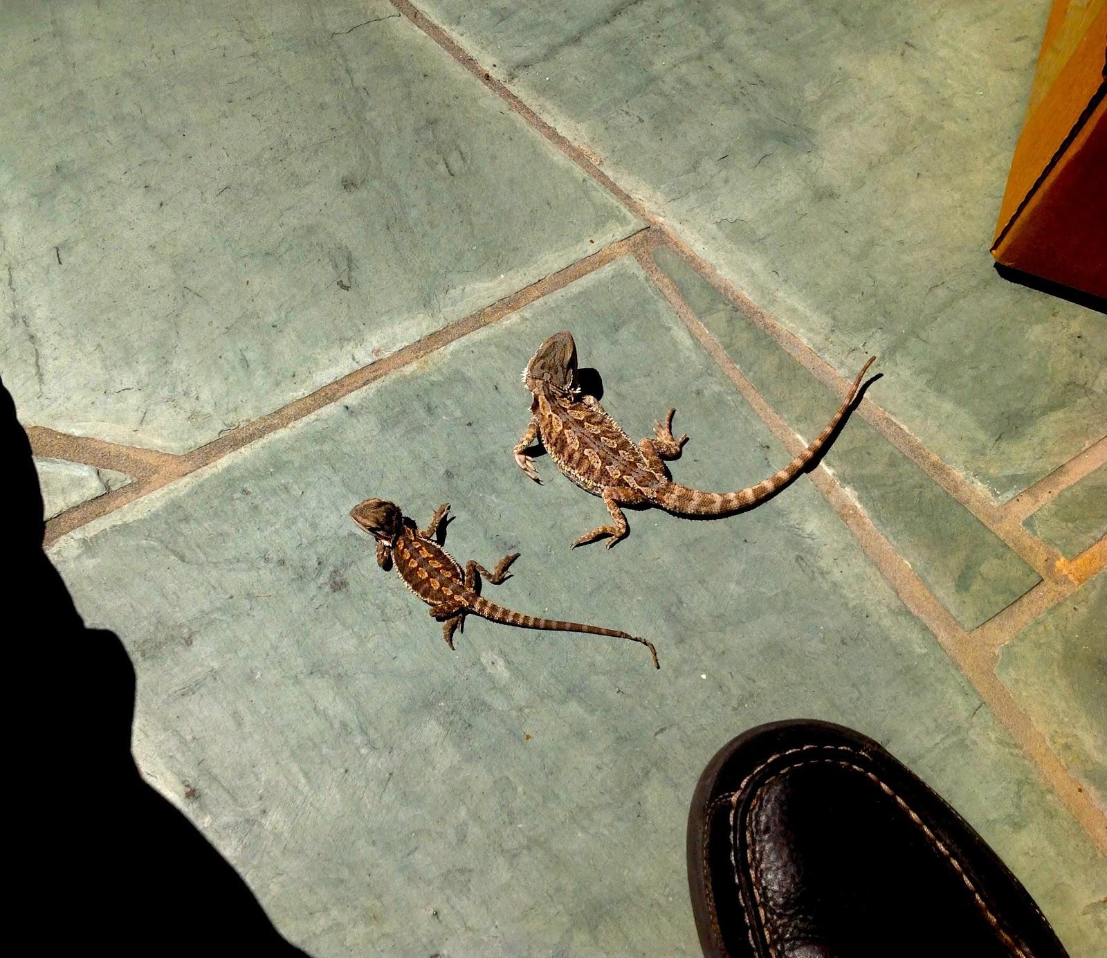 slate tiles for bearded dragons photo - 3