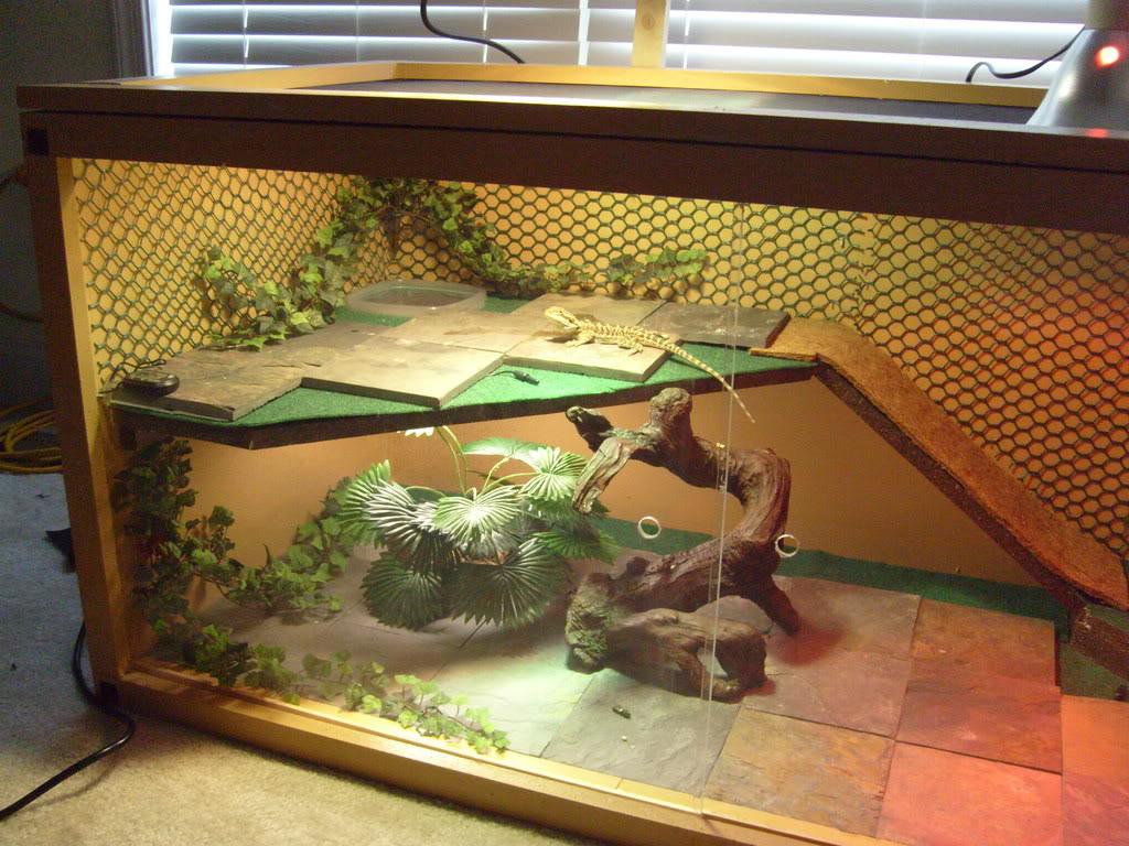 slate tiles for bearded dragons photo - 7