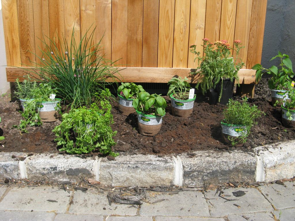 Delicieux Small Easy Herb Garden