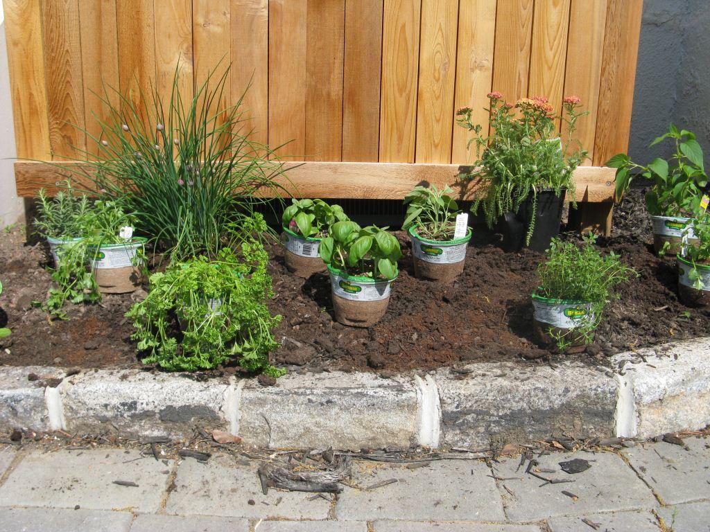 Small easy herb garden | Hawk Haven