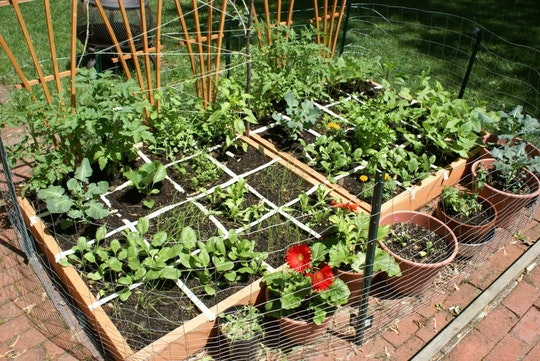 small easy vegetable garden photo - 1
