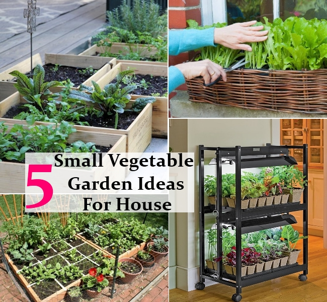 small easy vegetable garden photo - 4