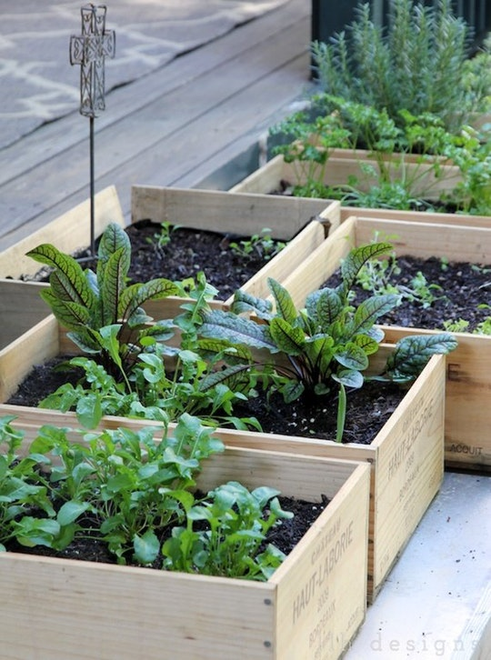 small easy vegetable garden photo - 5