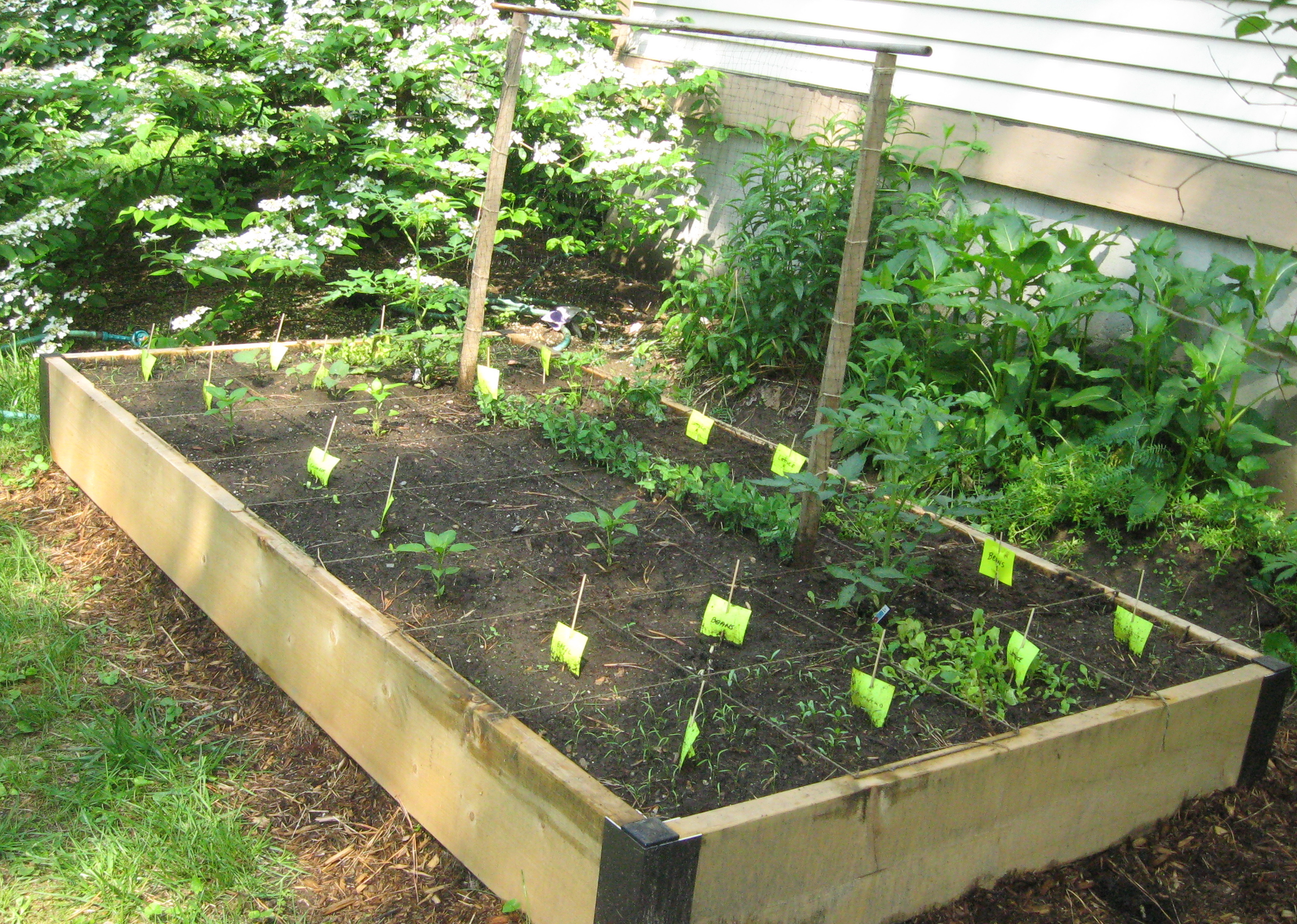 small easy vegetable garden photo - 7