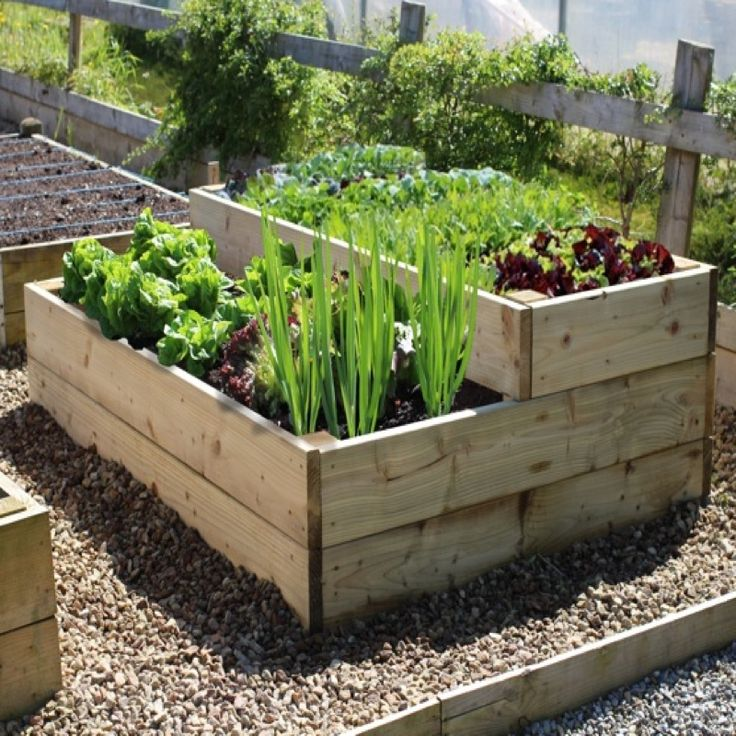 small easy vegetable garden photo - 9