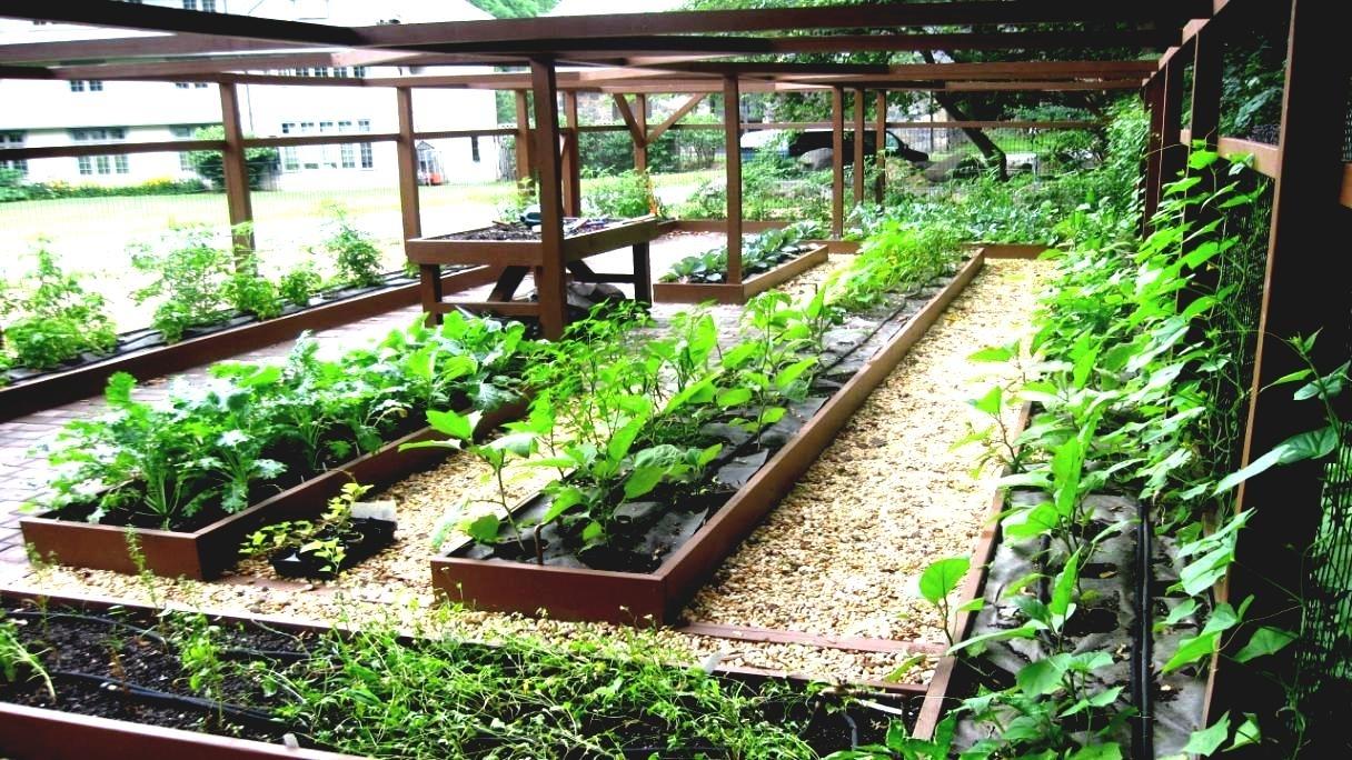 starting an urban vegetable garden photo - 1