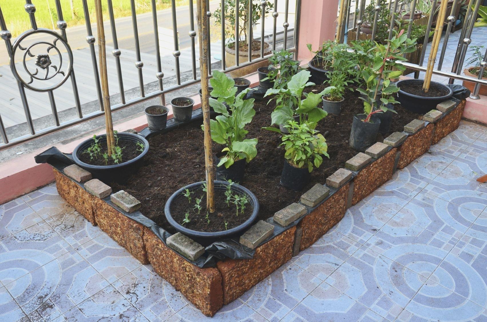 starting an urban vegetable garden photo - 2